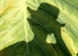 Self Portrait in Giant Leaf