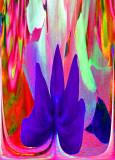 Clerodendrum thomsoniae -Glory Bower- EXP-1-1.jpg