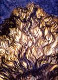 Fungi-Underside