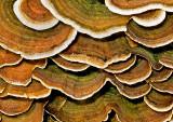 Fungi---5