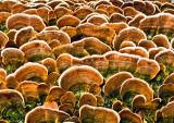 Fungi---4