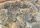 Fungi-Gills---3-copy.jpg