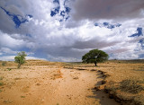 Feeder for Nossob River, Kgalagadi Transfrontier Park