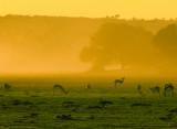 Mata Mata, Kgalagadi Transfrontier Park
