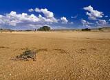 Dry River Bed, Nossob, Kgalagadi Transfrontier Park