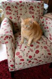 otto not yet endorsing the poppy chair