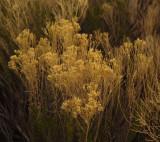 crop IMG_4316 Guadalupe.jpg