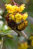Hornet - side/back view
