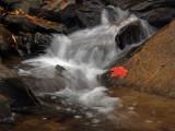 wThe Red Leaf2.jpg
