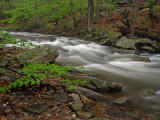 wHunting Creek in Spring2 P4261205.jpg