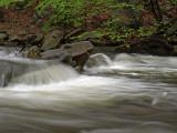 wHunting Creek in Spring3 P4261217.jpg
