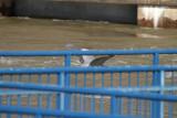 HeronFlt012.jpg