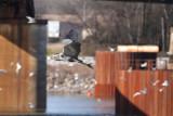 HeronFlt063.jpg