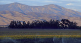 Mauve Sunset Over the Gabilan Mountains, from the Salinas Valley