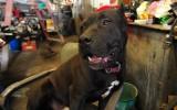 Dog at Tom's