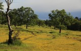 Gold is Where You Find It: Upper Bidwell Park, above Chico, California