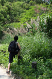 Shooting to leaves in Tsing Tam Reservoir