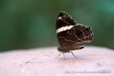 Butterfly ½¹½º