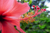 appealing red flowers in super macro mode