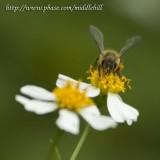 Bee - 023