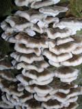 Rows of Fungi