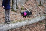Walking the Log.....er Dog