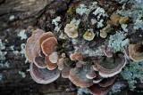 Fungi Party