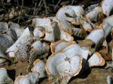 Fungi Contrast