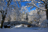 Snow January 2010