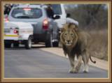 Kruger National Park Game Reserve