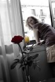Barcelona Roses