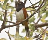 misc_song_birds