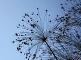 Botanical Gardens, Lucca