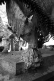 West Cemetery, Darlington