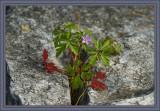 A natural flower arrangement