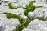 Burren Garden