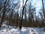 Stillness of the woods