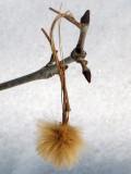 On a fallen branch