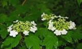 Unrecognized flowers