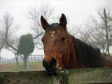 Good horsie!