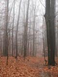 Misty woods on a rainy day