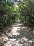 Path to Mosquito Lagoon