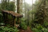 Bellavista Cloud Forest Reserve (2009)