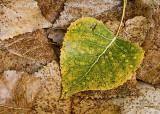 Dew drops on leaf