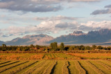 Farm fields in Mesilla framed by the Organ Mountains