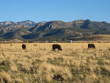 Ranch and farm land outside Chiricahua