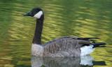 goose 130