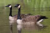 goose 131