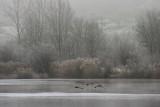 fog_at_the_lake