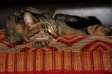 Classic Cat Nap.